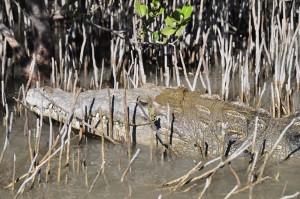 Everglades,flamingo,islamorada,crocodile