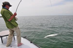 Tarpon,Flyfishing,Islamorada,Florida Keys,Keywest,Permit,Bonefish,Fishing,sightfishing,everglades,flamingo,marquesas,hellsbay